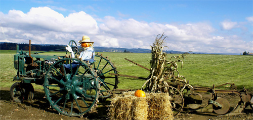 Photo of a pumpkin-headed scarecrow driving an old tractor. Photo Credit:  Flickr User SWAINBOAT