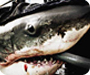 Shark Men: Marine Conservationists For Sharks